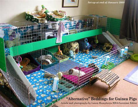 guinea pig bedding ideas creative guinea pig cage ideas cavy pig stuff and animal