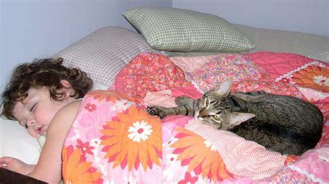 cat parasite toxoplasma gondii can increase