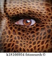human skin texture stock photo 169 oksixx 122414784 animal skin patterns stock photo images 20 829 animal skin patterns royalty free pictures and