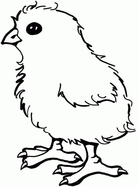 baby chick coloring pages clipart best
