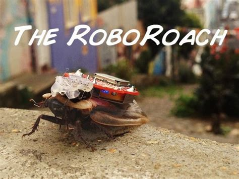 backyard brains roboroach roboroach cyborginsekt f 252 r daheim golem de