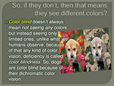 is dogs color blind are dogs color blind