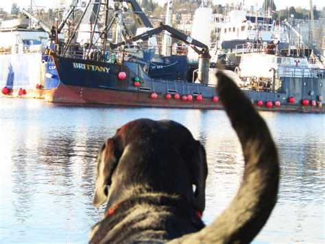salty boats salty boating news salty maritime marketing pnw ak commercial fishing
