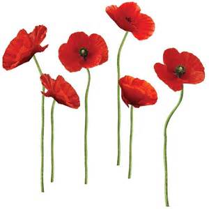 Poppy Wall Sticker Poppy Wall Stickers Flower Wall Stickers By Roommates