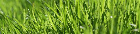 Rasen Kalken Zeitpunkt 5001 by Rasen Kalken Oder Dngen Cheap Das Berdngen Hingegen Macht