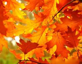 colors of fall 8 best fall paint colors how to decorate with fall colors