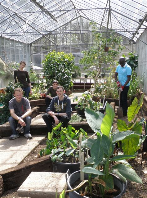 Tropical Island Plants - welcome to our greenhouse tropical biodiversity