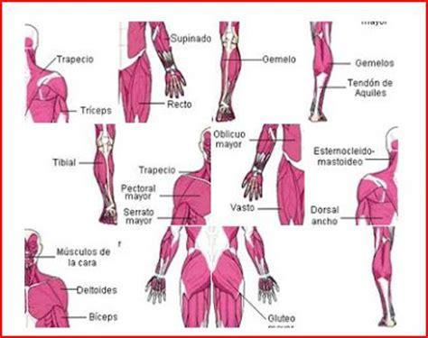 imagenes artisticas del cuerpo humano deportescolar21 m 250 sculos del cuerpo humano