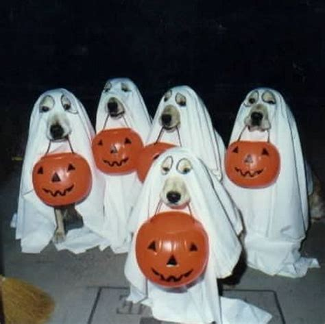 do dogs see ghosts ghost dogs cuteness