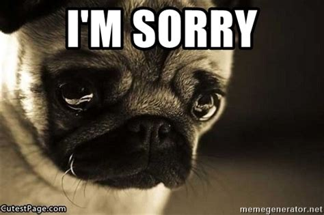 sorry pug i m sorry sad pug puppy meme generator