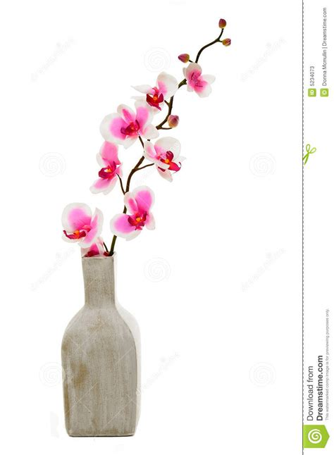 Black Bud Vase Pink Orchid In Vase Stock Image Image Of Yellow Square