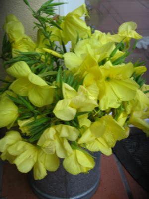 imagenes de flores que abren de noche sus flores solo se abren de noche