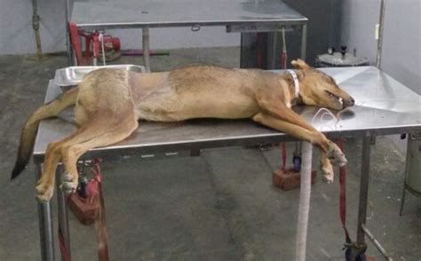 rs for dogs to get into house tamil nadu engineering student arrested for killing puppy let of after token fine of