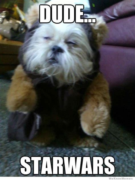 Dude Star Wars Dog   WeKnowMemes