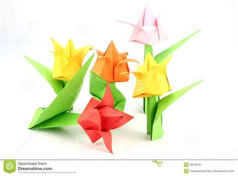 Origami Tulip Flower - origami tulip flower stock image image 36246121