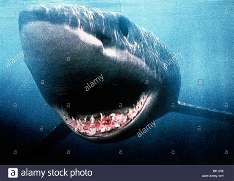 megalodon shark attacks boat megalodon stock photos megalodon stock images alamy