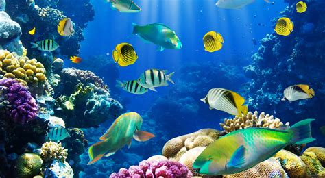 3d Plan by Tropical Fish Full Hd Fond D 233 Cran And Arri 232 Re Plan