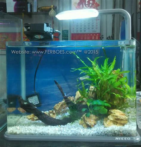 Pompa Aquarium Mini Murah aquascape minimalis berikut ini detailnya ferboes