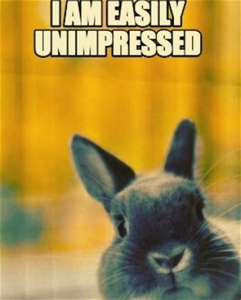 Angry Bunny Meme - 25 best ideas about bunny meme on pinterest funny