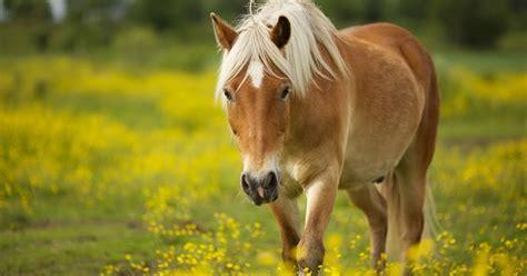 Sho Kuda Untuk Manusia gambar kuda lengkap gambar foto