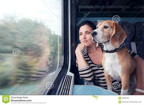 traveling with puppy travel with into the wagon stock photo image 58808184