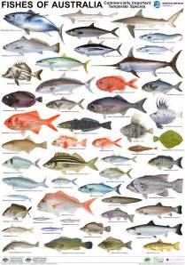Australian Fish Poster 3 Poster Set ? $90 per set