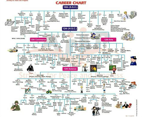 career flowchart career path flow chart related keywords career path flow