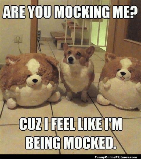 Animals Memes - animal humor funny quotes quotesgram