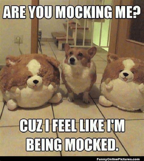 Animal Humor Funny Quotes. QuotesGram