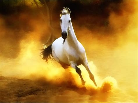 wallpaper horse free download horse animals image free wallpapers download