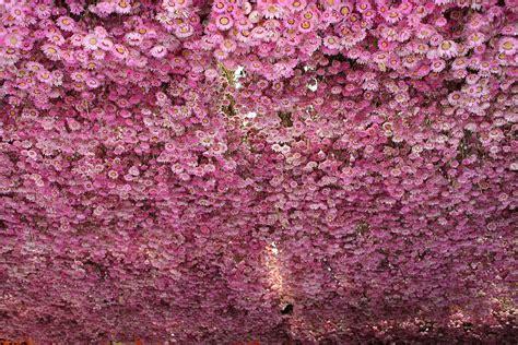 ci di fiori olanda olanda fiori ad amseterdam viaggi vacanze e turismo