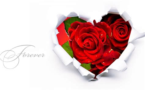 wallpaper hd red rose red rose wallpapers red flowers hd pictures one hd