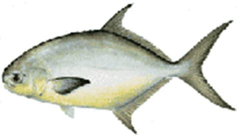 florida saltwater boating regulations fishing saltwater regulations