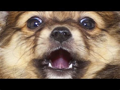 when you an anxious puppy buzzfeed when you an anxious puppy presented by buzzfeed doovi