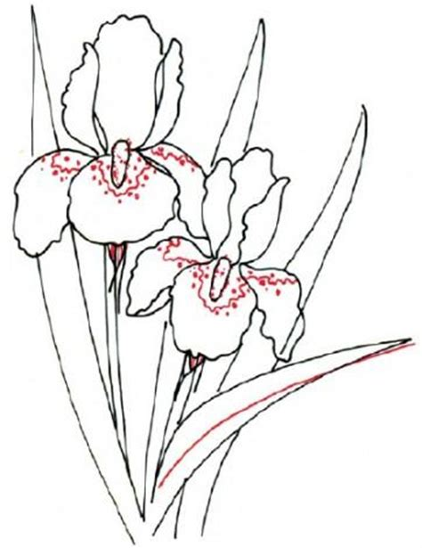 Iris Outline by Coloring For Step By Step Drawing Of An Iris In Pencil How To Draw Painting And Drawing