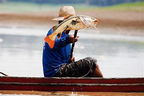 noticia sobre seguro do pescador codefat divulga calend 225 rio para pagamento do seguro defeso