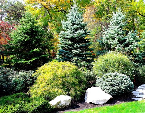 backyard plants and trees privacy planting outdoor ideas pinterest privacy
