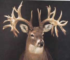 missouri monarch the world record non typical whitetail buck