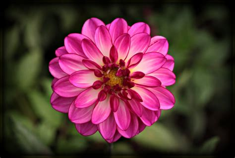 flowers blooming the gallery for gt blooming flower gif