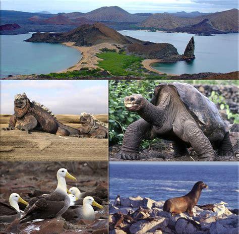 imagenes animales galapagos la biodiversidad de galapagos fauna de las islas galapagos