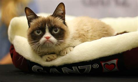 grumpy cats outrageous earnings   talk   tabloids cult  mac