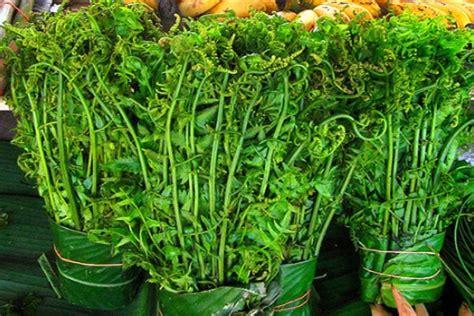 mengulik nutrisi pakis daun tinggi protein  bisa jadi