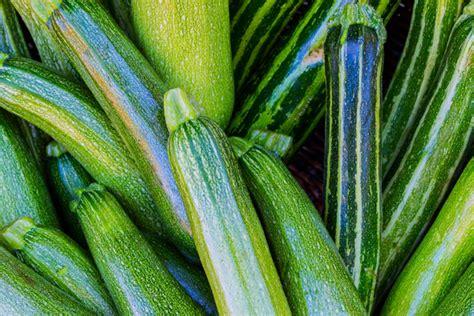 coltivazione zucchine in vaso come coltivare le zucchine in vaso guadagno risparmiando