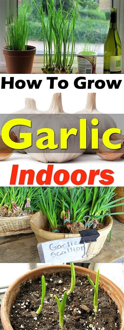 indoor vegetable gardening ideas beautiful indoor container gardening gallery interior