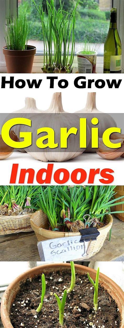 indoor container gardening ideas beautiful indoor container gardening gallery interior
