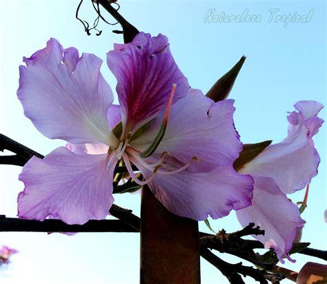 imagenes de flores y arboles naturaleza tropical 8 225 rboles con flores espectaculares