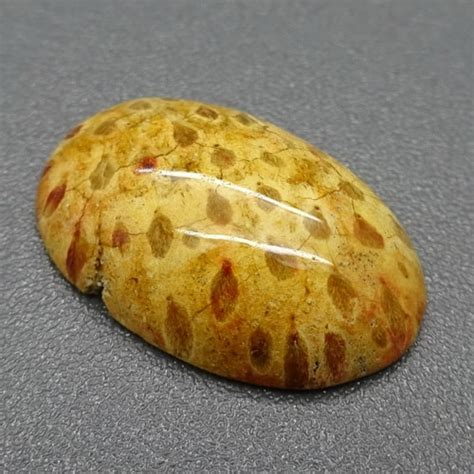 Batu Mustika Fosil Kayu mustika fosil kayu kelapa pusaka dunia