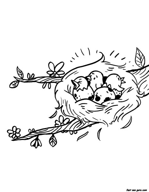 coloring pages of bird eggs bird nest coloring