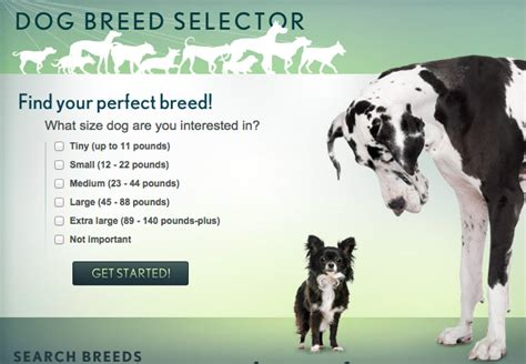 breed matcher 8 breed selector tools for find your