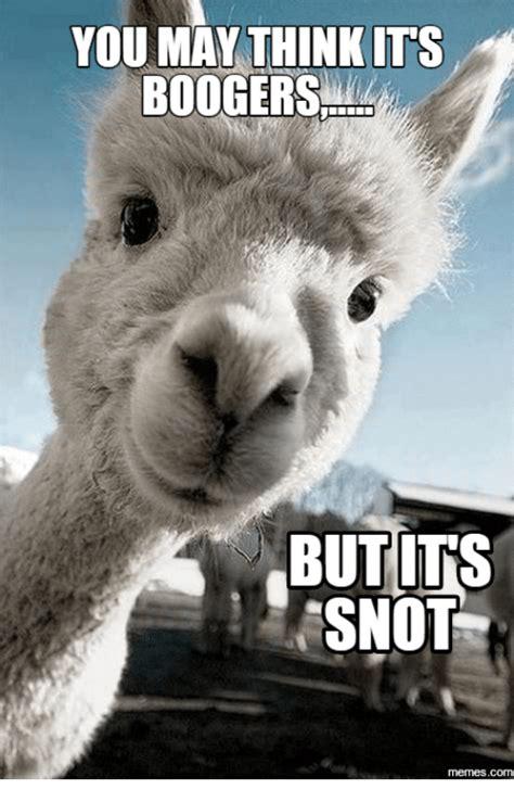Alpaca Sheep Meme - alpaca sheep meme 28 images random thoughts thread